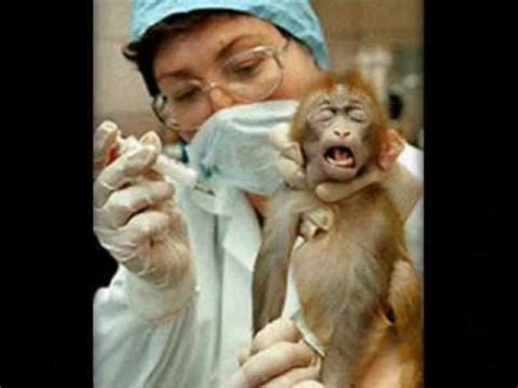 vivi section barbaric animal experimentation vivisection youtube