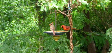 how to attract birds to your backyard how to attract birds to your yard welcome wildlife
