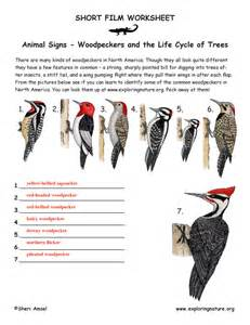 woodpeckers in your forest learn to identify them
