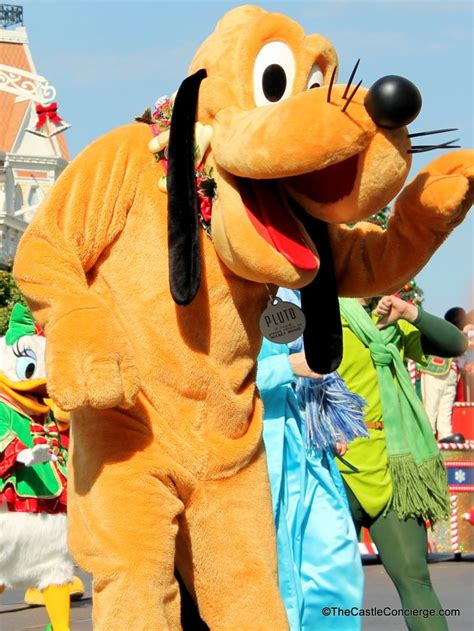 dogs at disney world news friendly disney hotels now taking reservations