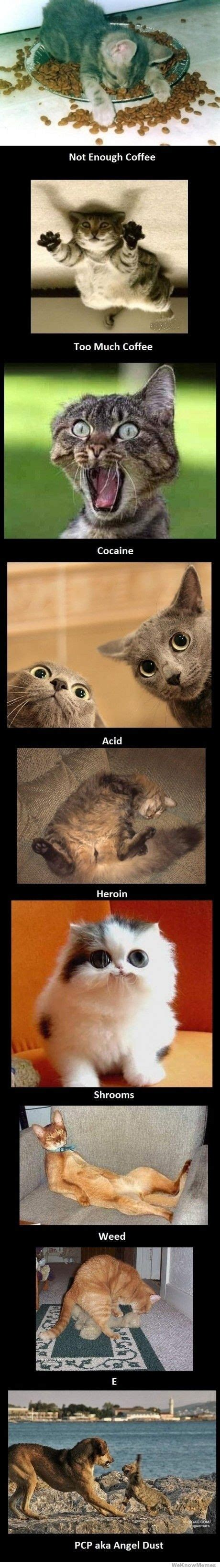 Cat Cocaine Meme - your cat on drugs weknowmemes