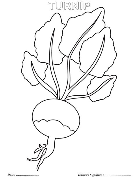 turnip coloring page giant turnip classroom ideas