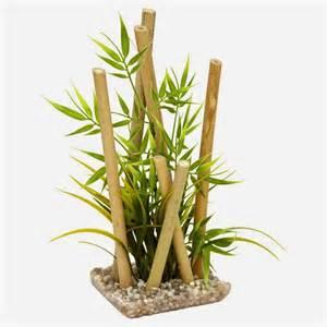 Entretien Bambou En Pot