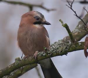 mooz oiseaux des jardins 176 176 176