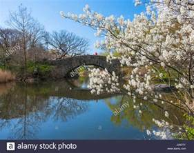 Anderson Bow Windows cherry trees central park stock photos amp cherry trees