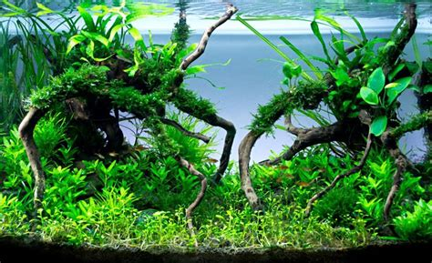 forest aquascape hac aquascaping contest mangrove forest juh 225 sz viktor