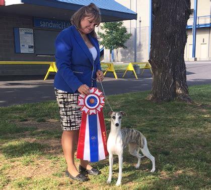 kennels spokane spokane kennel club saturday may 28 2016 canine chronicle