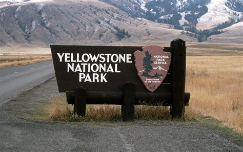 yellowstone national park new findings on wolf and elk populations in yellowstone