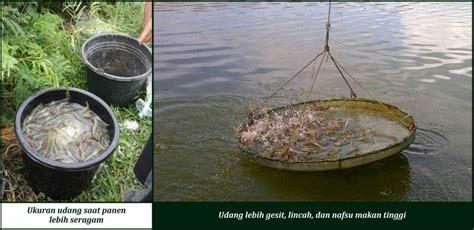 Pupuk Organik Pada Tambak spesialis kolam tambak dan karamba suplemen dan pupuk