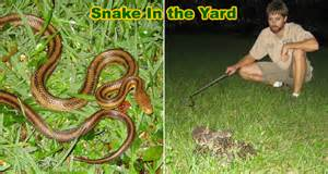 How To Catch A Snake In Your Backyard How To Keep Snakes Out Of Your Yard