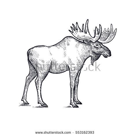 forest animal moose hand drawing sketch stock vector