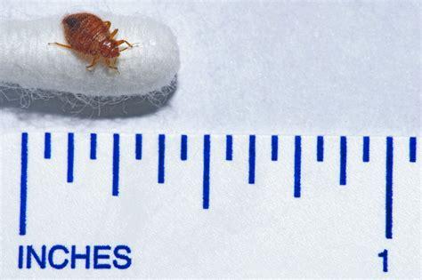 bedbugs nhsuk