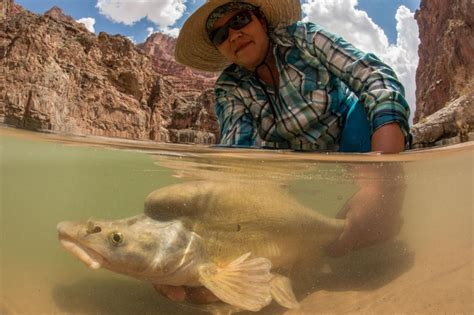 boat crash colorado river cause even the bottom of the grand canyon is now contaminated