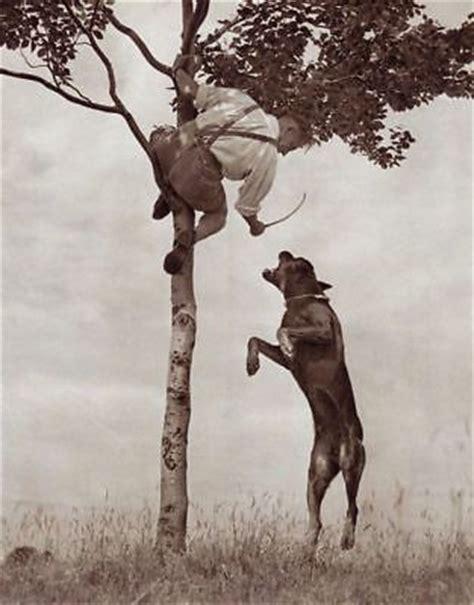 rottweiler schutzhund rottweiler schutzhund bite work quality 1941 print sport