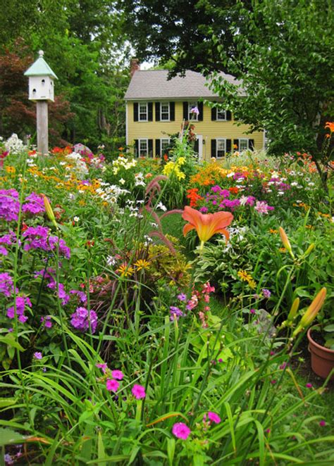 plants for cottage garden daylilies in australia cottage gardens bulbs
