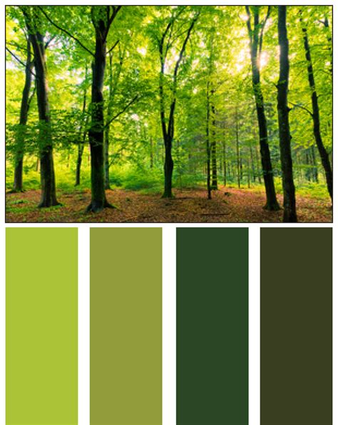 colors from nature forest green color palette www imgkid com the image