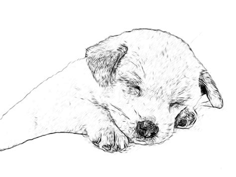 puppies drawings line drawing pencil and charcoal galleries labrador retriever puppies pencil