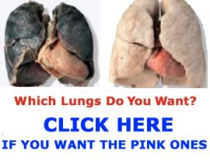 Best Way To Detox Lungs by Lung Detoxification Best Way To Clean Your Lungs