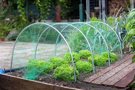 piccola serra da giardino serre da balcone piante da terrazzo come costruire