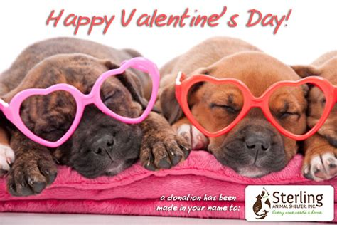 happy valentines day animals dogs happy s day with images litle pups