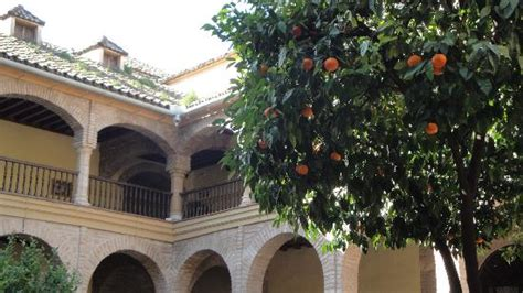 Patio Orange Tree by Orange Tree In The Patio Picture Of Palacio De Viana