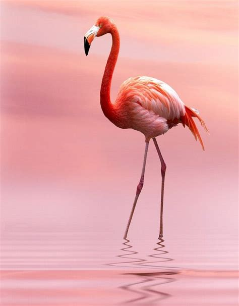 pink flamingos 25 best ideas about pink flamingos on pinterest flamingos pink flamingos birds and flamingo