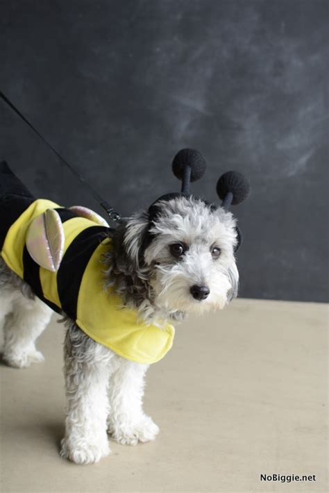 bumble bee costume for dogs 25 creative costumes for dogs nobiggie