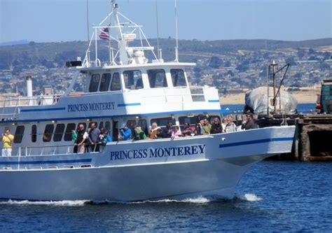 monterey whale watching boats princess monterey whale watching monterey ca picture