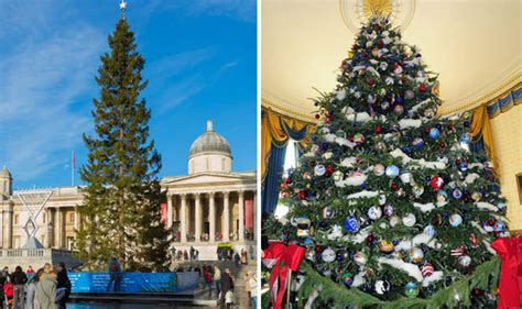 who introduced xmas trees to britain fraser fir to usurp spruce as uk s favourite tree nature news express