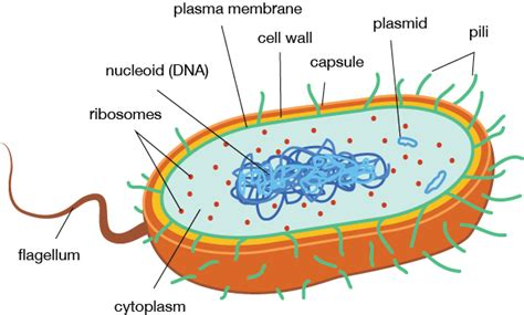diagram bacterial cell module 2 in the sea part 2 wavemakers