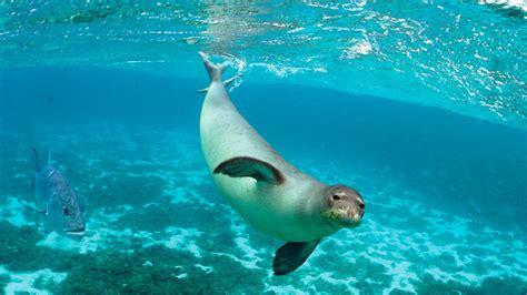 los animales marinos al 8498256720 c 243 mo ha sido la evoluci 243 n de los mam 237 feros marinos para estar bajo el agua cim formaci 243 n