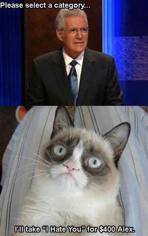Suck It Trebek Meme - grumpycat meme for more grumpy cat stuff gifts and