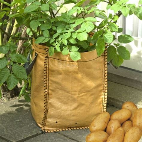Jual Polybag Terpal budidaya kentang dengan polybag ayo berkebun