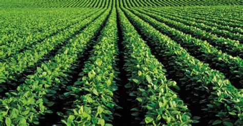 Point One Crop soybeans fall 1 percent as usda pegs crop condition above forecasts