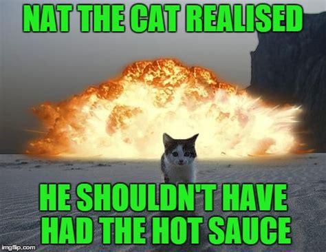 Cat Fart Meme - cat fart funny cat imgflip