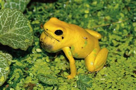 virtually frogs how to stay afloat in the dating pond books care tips for the golden dart frog