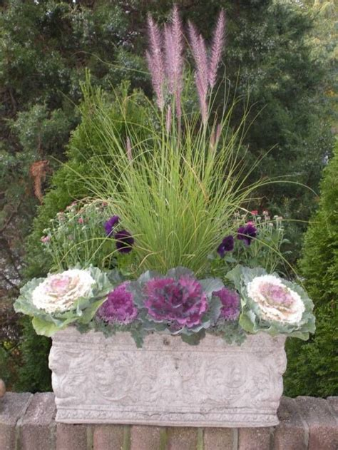 Ornamental Grasses For Planters by Fall Planter With Cabbage Mums Pansies