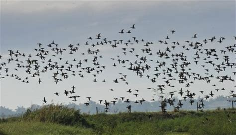 birds vanishing in the philippines