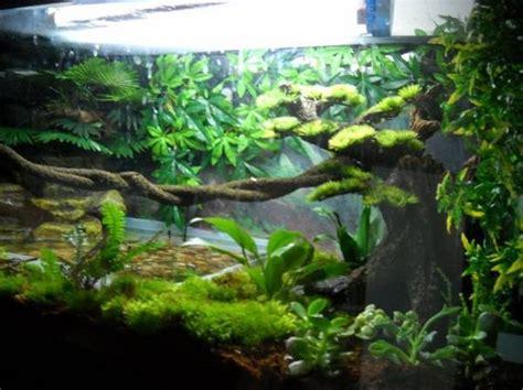 best 25 gecko vivarium ideas on pinterest