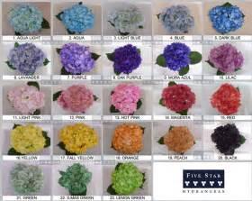 hydrangea color tinted fresh wedding hydrangea by five hydrangea
