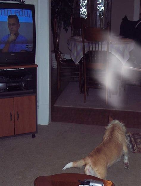 do dogs see ghosts ghosts photo gallery