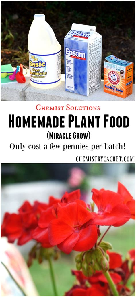 Homemade Flower Food | chemist solutions easy homemade plant food recipe