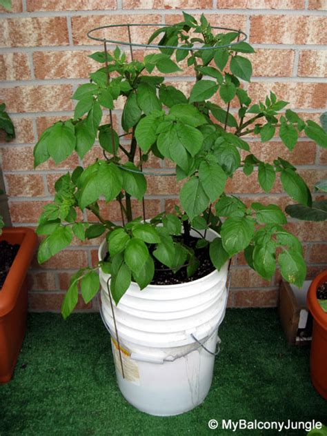 5 Gallon Bucket Self Watering Containers See More About 5 Gallon Vegetable Garden