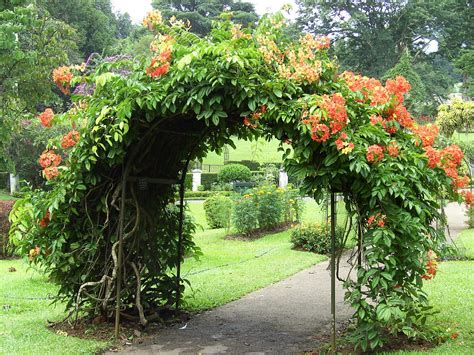Royal Botanical Gardens Peradeniya by Experience Sri Lanka Culture With Verav Travel Company