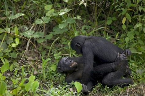 imagenes de animales apareandose estrategias para ligar quo