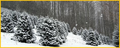 cornett and deal christmas tree farm nc christmas tree farms