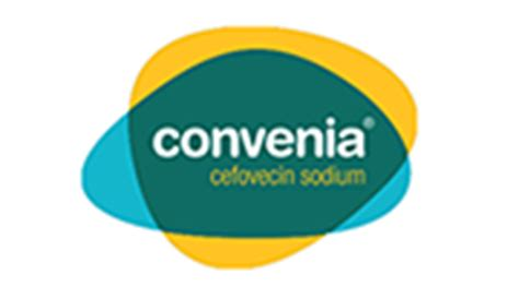 convenia for dogs convenia dogs deserve the best chance of recovery zoetis uk