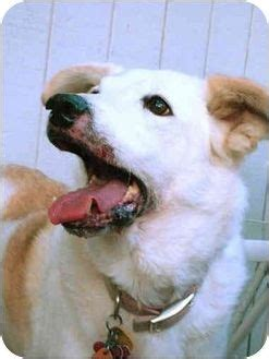 adoptable dogs in iowa the world s catalog of ideas