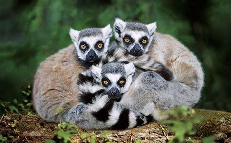 Calendario Animal Protector Madagascar Fundaci 243 N Aquae