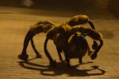 puppy spider of in spider costume terrifying geekologie